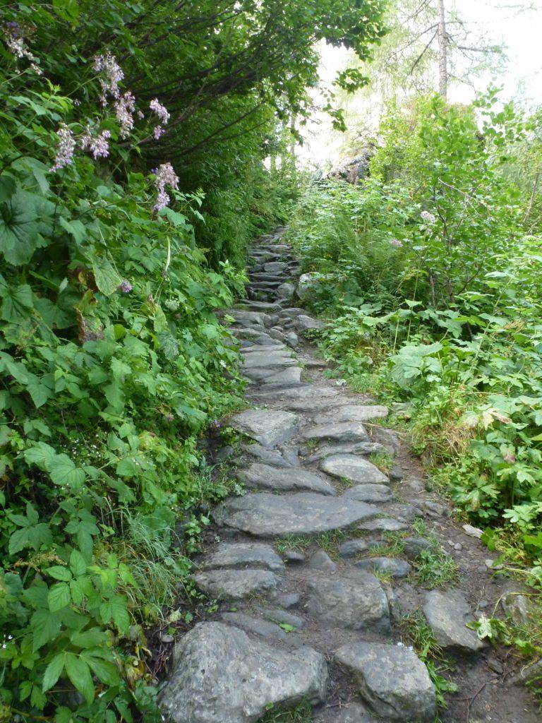 chemin nature sérénité